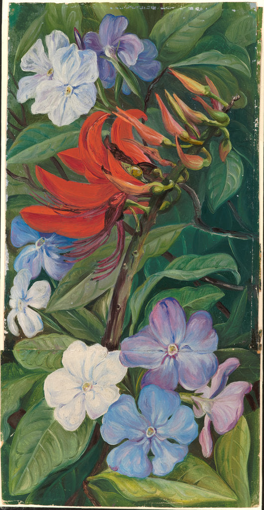 Detail of 151. Flowers of a Brazilian coral tree and vegetable mercury, 1873 by Marianne North