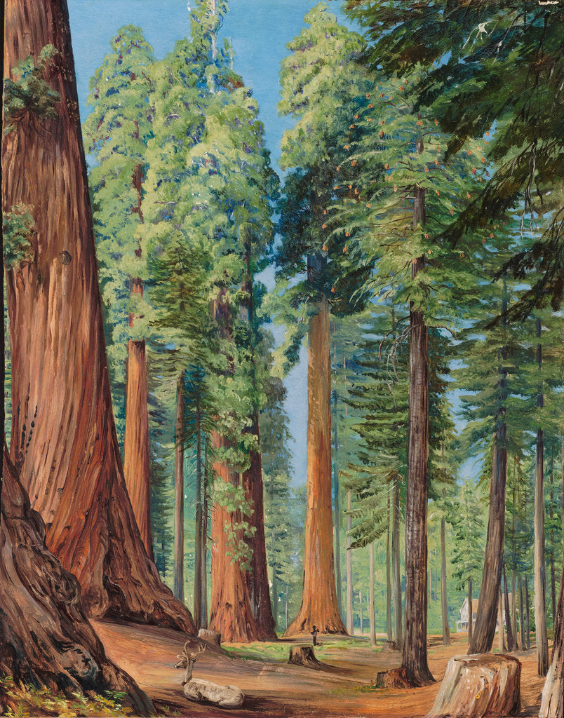 Detail of 154. The Calaveras Grove of the big tree, or Wellingtonia, in the evening, 1875 by Marianne North