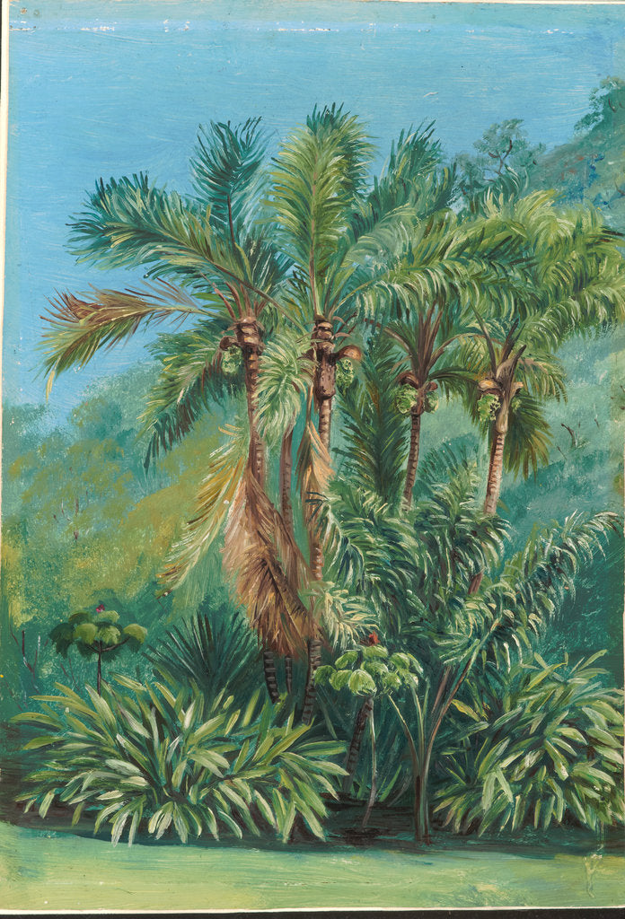 Detail of 159. Group of small palms, Rio Janeiro, Brazil, 1873 by Marianne North