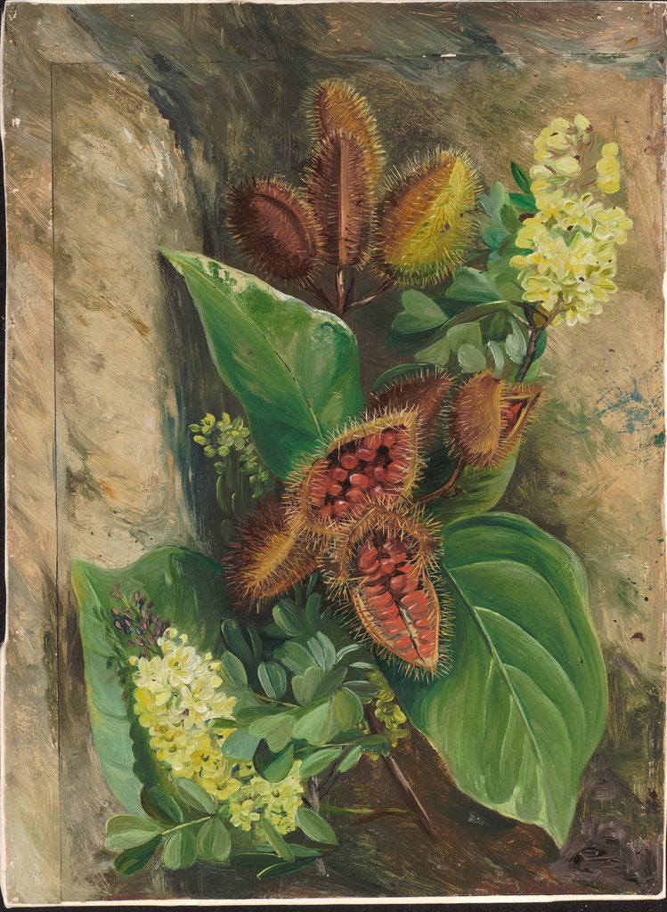 Detail of 160. Foliage and fruit of arnatto and foliage and flowers of logwood, Jamaica, 1872 by Marianne North