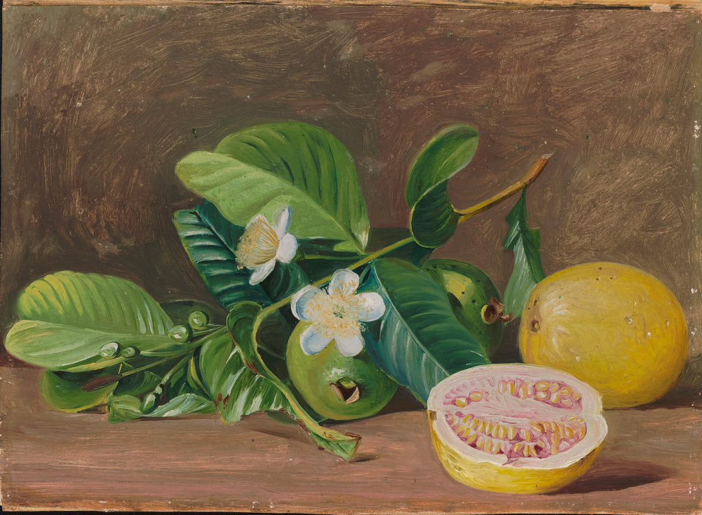 Detail of 162. Foliage, flowers, and fruit of a variety of guava, 1878 by Marianne North