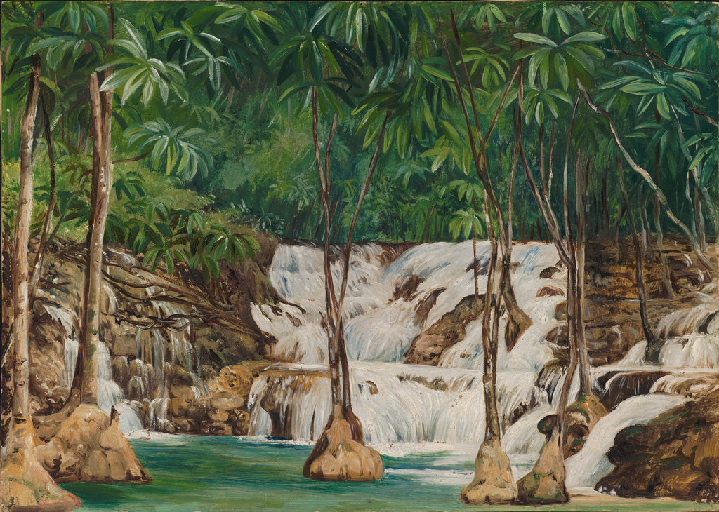 Detail of 166. One of the sources of the roaring river, Jamaica, 1872 by Marianne North