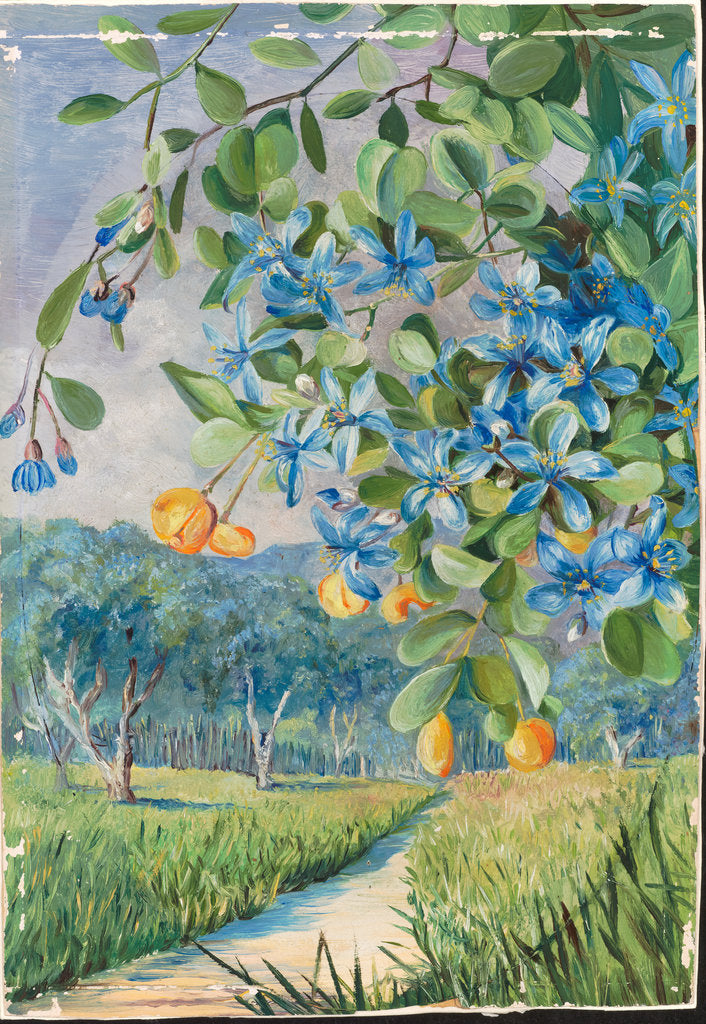 Detail of 168. Foliage, flowers, and fruit of lignum vitae, Jamaica, 1872 by Marianne North