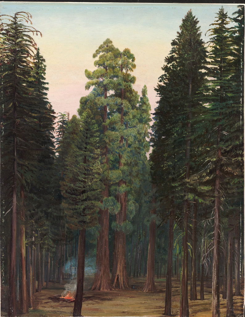 Detail of 171. Looking into the Calaveras Grove of big trees, California, 1875 by Marianne North