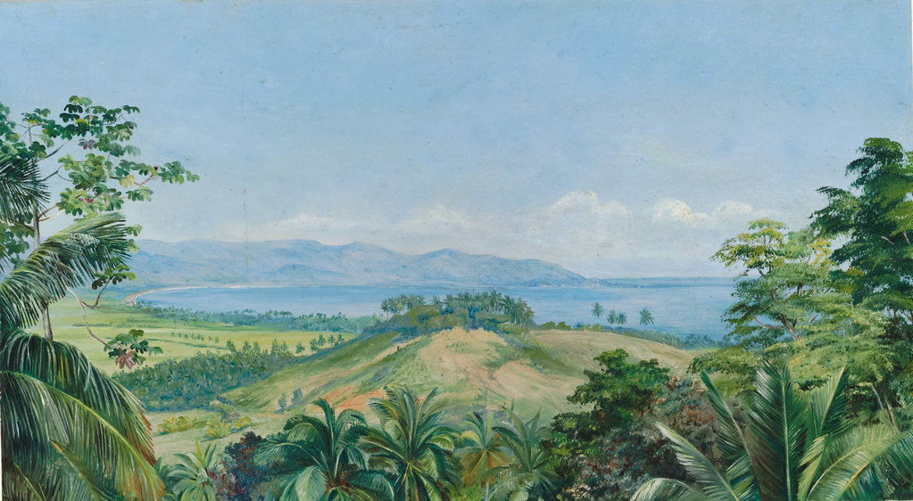 Detail of 172. View from spring gardens, Buff's Bay, Jamaica, 1872 by Marianne North