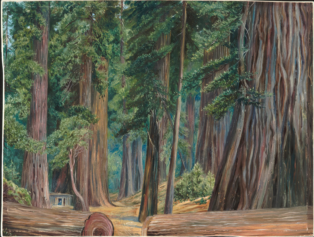 Detail of 173. Under the redwood trees at Goerneville, California, 1875 by Marianne North