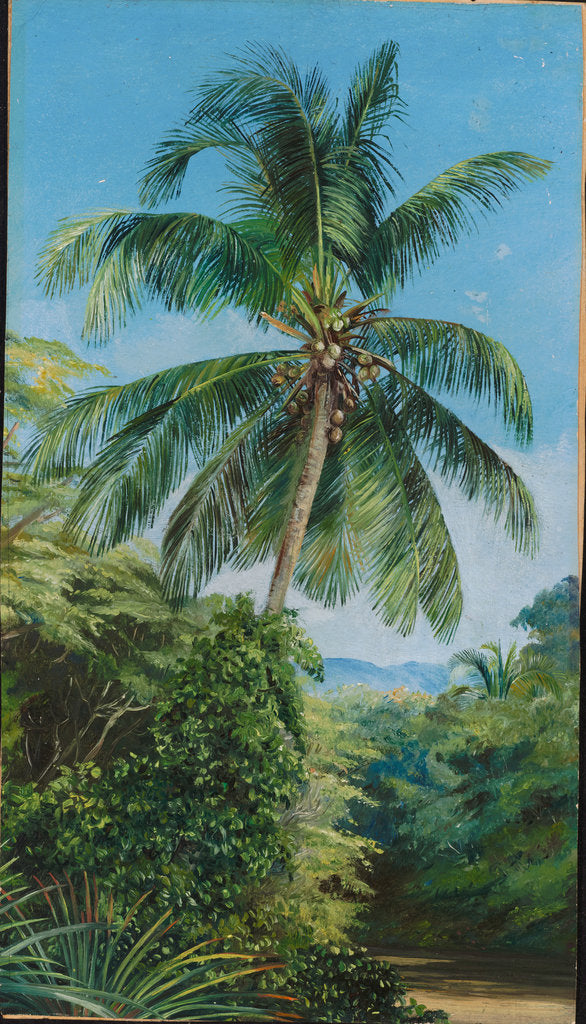 Detail of 174. Study of cocoanut palm, 1870 by Marianne North