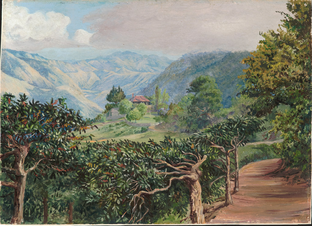 Detail of 177. Coffee plantation at Clifton Mount, and the Blue Mountains beyond Jamaica, 1872 by Marianne North