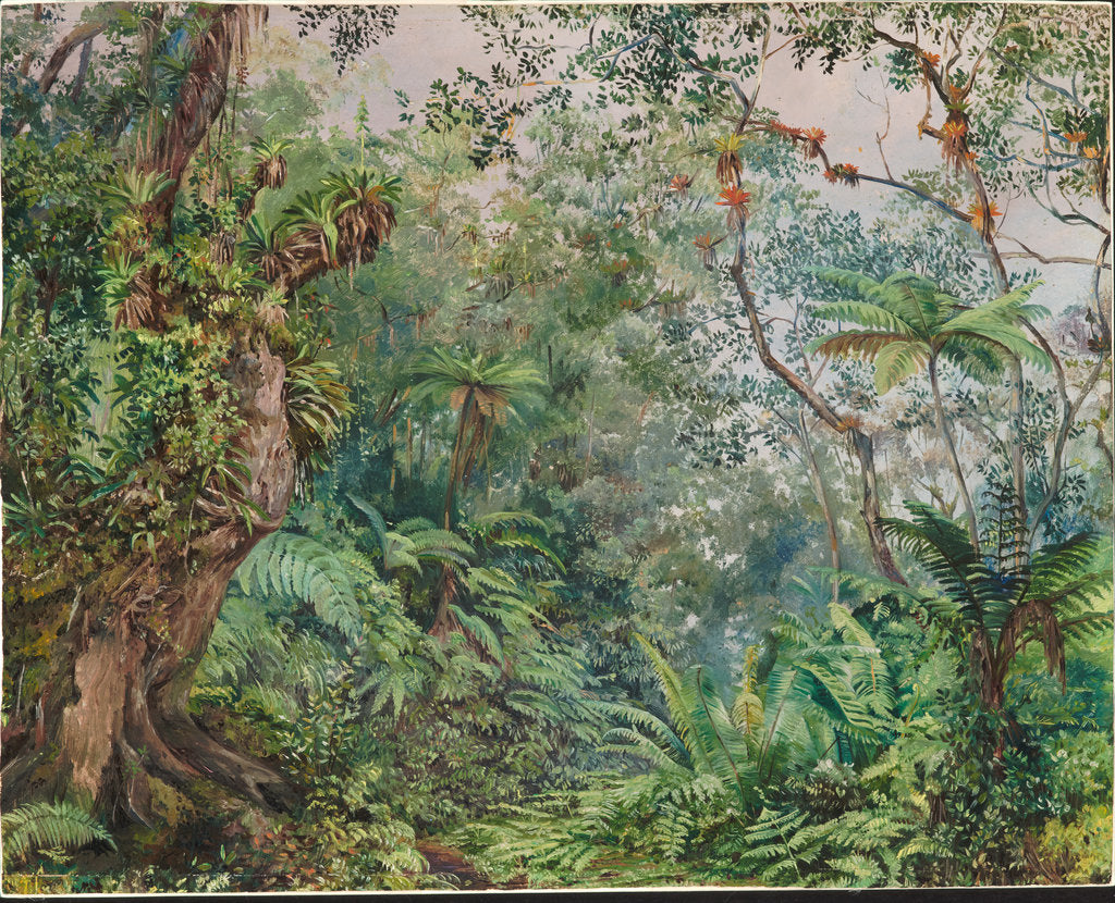 Detail of 179. View in the fernwalk, Jamaica, 1872 by Marianne North