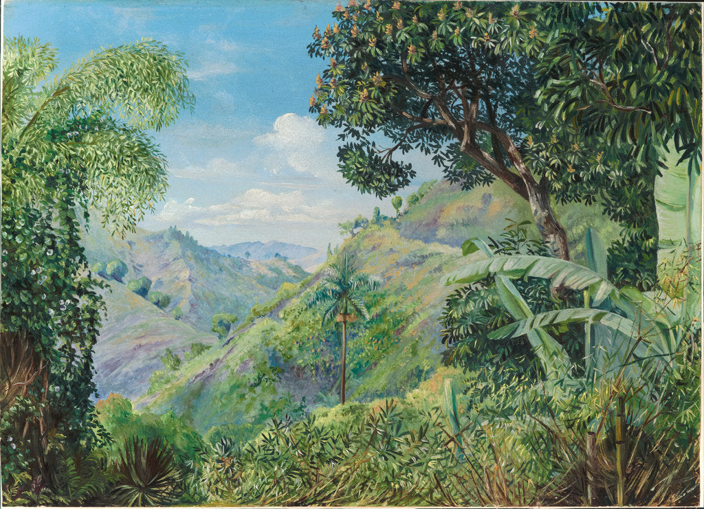 Detail of 181. View on the Flamsted Road, Jamaica, 1872 by Marianne North