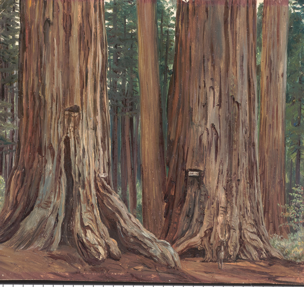 Detail of 184. Castor and pollux in the Calaveras Grove of big trees, California, 1875 by Marianne North