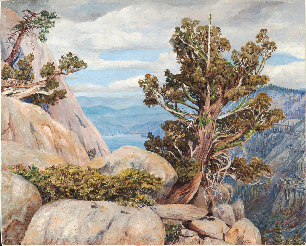 Detail of 188. Old cypress or juniper tree, Nevada mountains, California, 1875 by Marianne North