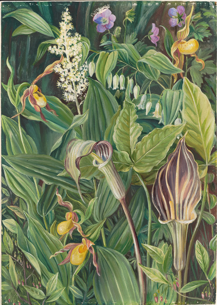 Detail of 192. Wild flowers from the neighbourhood of New York, 1871 by Marianne North