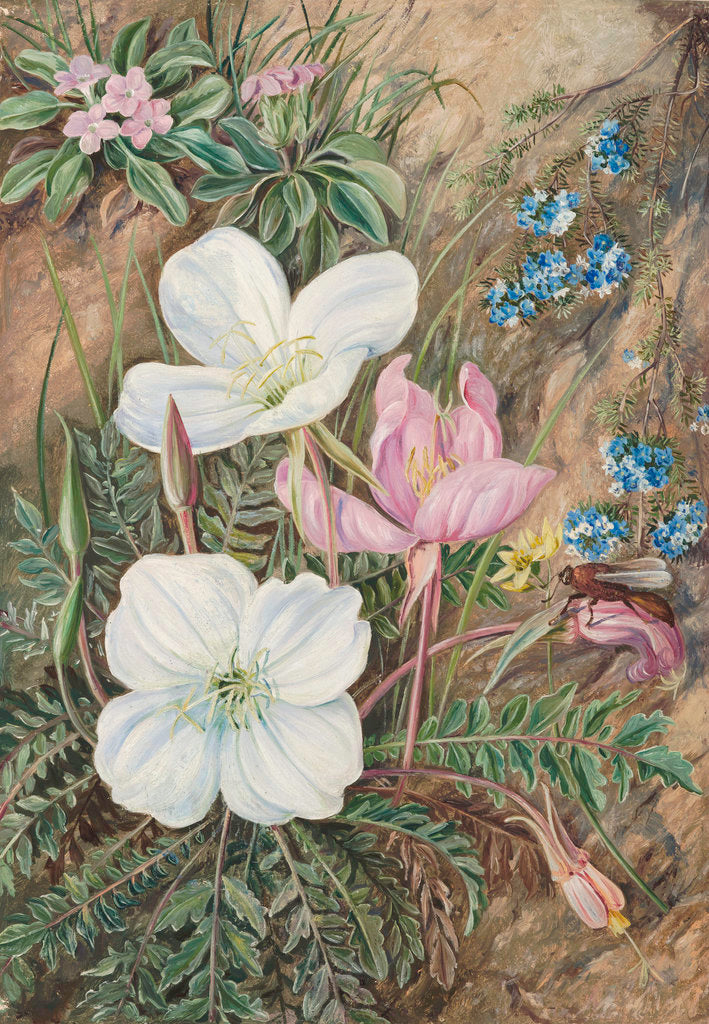 Detail of 9. Common Flowers of Chili. by Marianne North