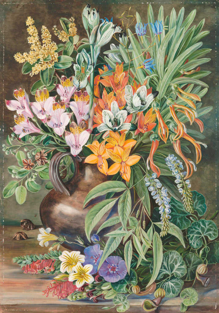 Detail of 12. Some Wild Flowers of Quilpue Chili. by Marianne North