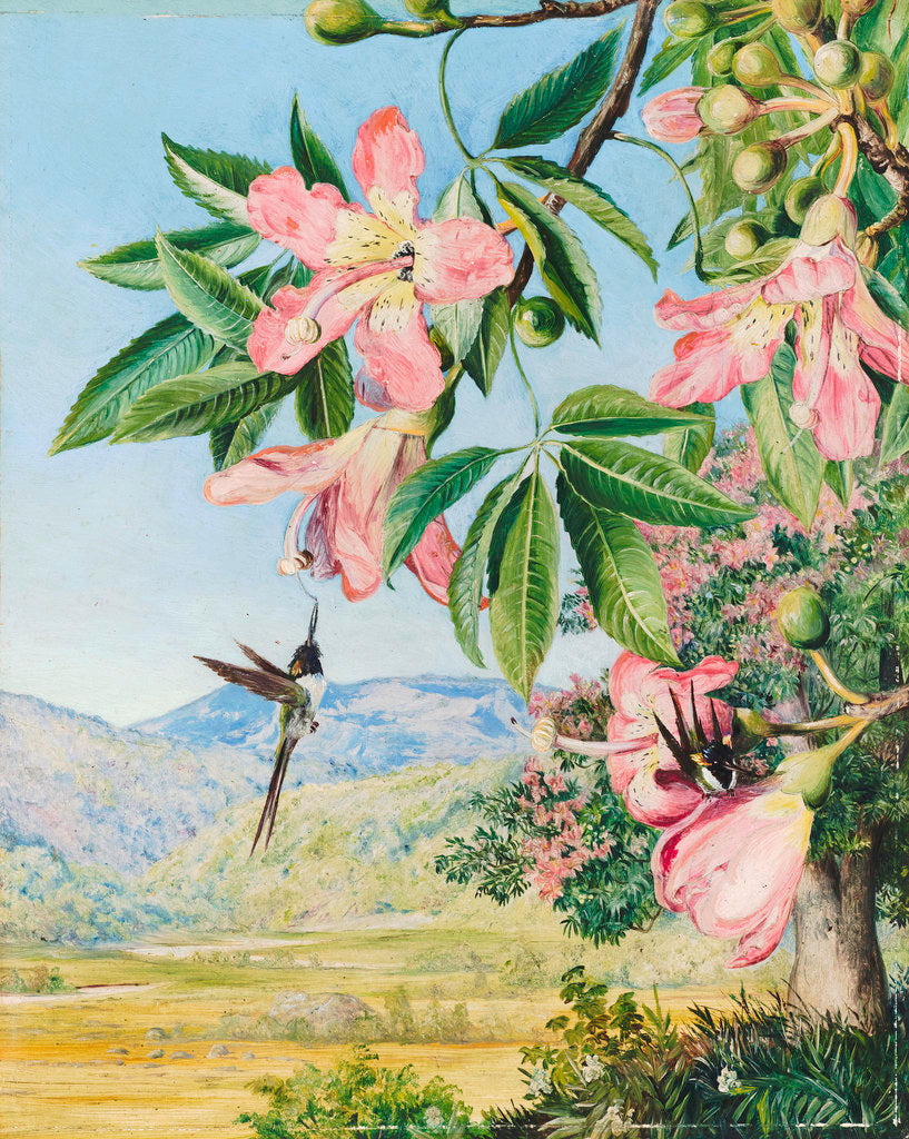 Detail of 97. Foliage and Flowers of a Coral tree and double-crested Humming Birds, Brazil. by Marianne North