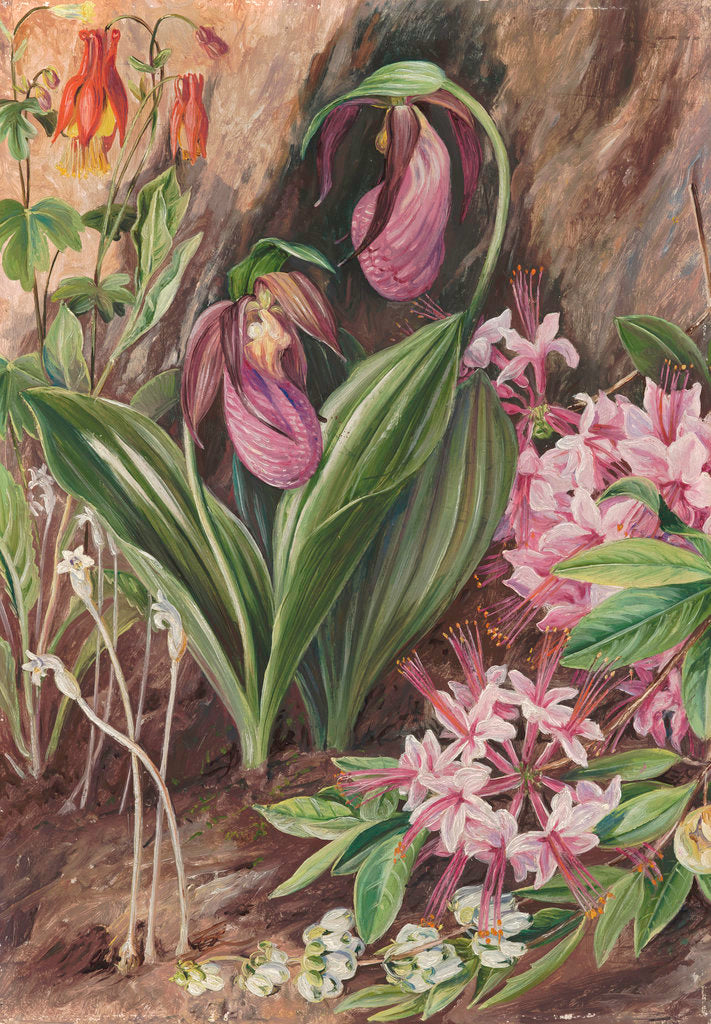 Detail of 194. Wild Flowers from the Neighbourhood of New York. by Marianne North