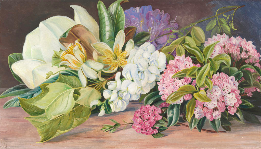 Detail of 199. Flowers of North American Trees and Shrubs. by Marianne North