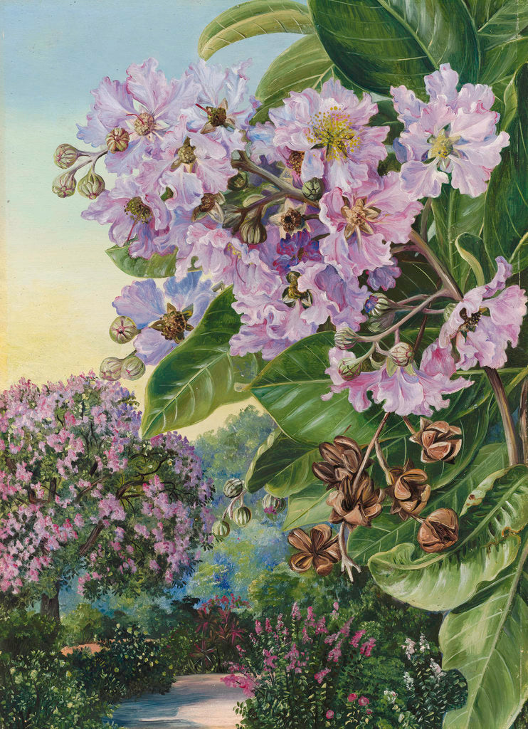 Detail of 257. Foliage, Flowers, and Fruit of a Forest Tree of India. by Marianne North