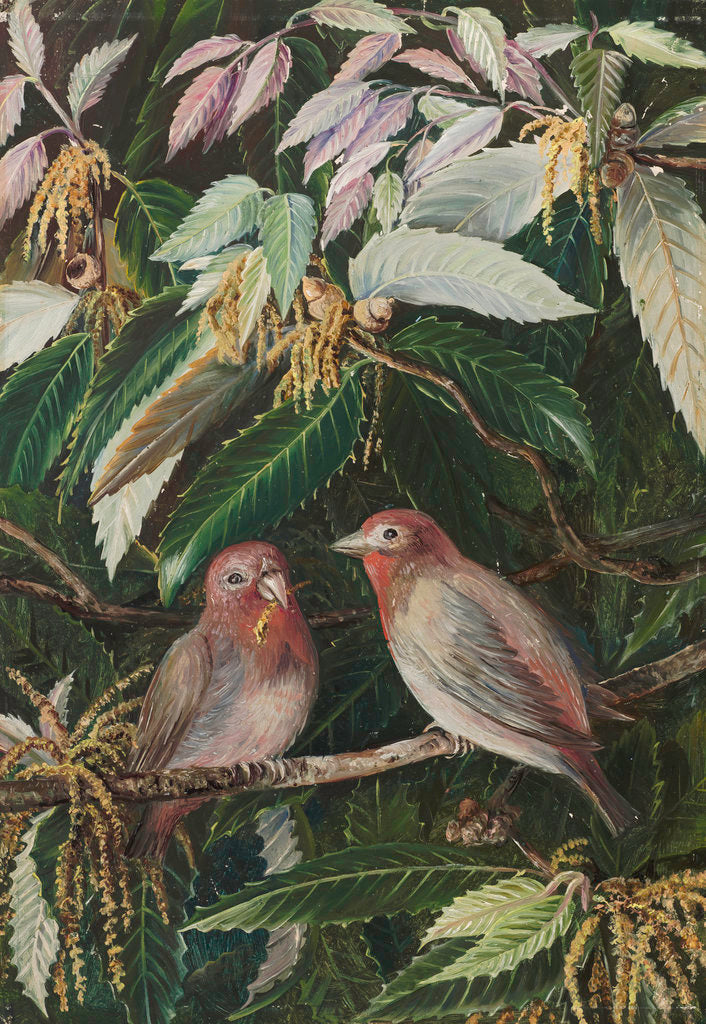 Detail of 282. A. Himalayan Oak and Birds, Nainee Tal, India. by Marianne North
