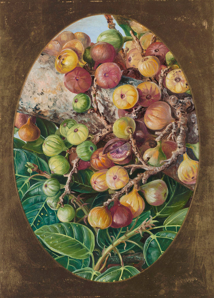 Detail of 306. Foliage and Fruit of Fig Tree held Sacred by the Hindoos. by Marianne North