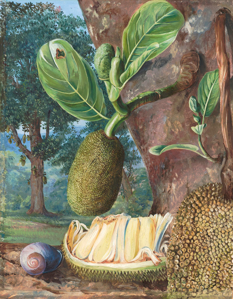 Detail of 333. Jak Fruit, Singapore. by Marianne North