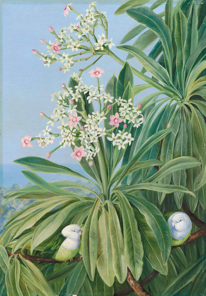 Detail of 358. Ordeal Plant or Tanghin and Parokeets of Madagasear. by Marianne North