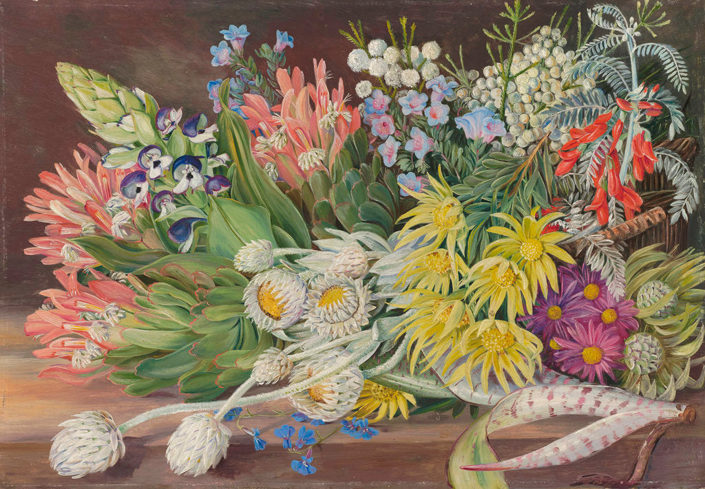 Detail of 405. A Medley of Flowers from Table Mountain, Cape of Good Hope. by Marianne North