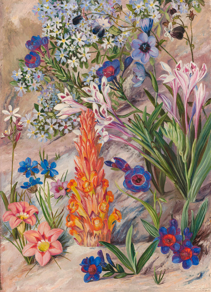 Detail of 423. A Medley from Groot Post, South Africa. by Marianne North