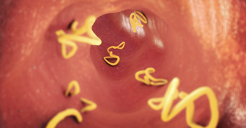 Stomach Parasites: What's Eating You From The Inside?