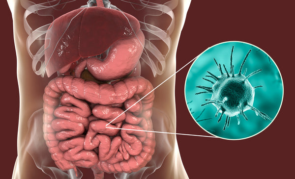 Stomach Parasites >> Stomach Parasites What S Eating You From The Inside