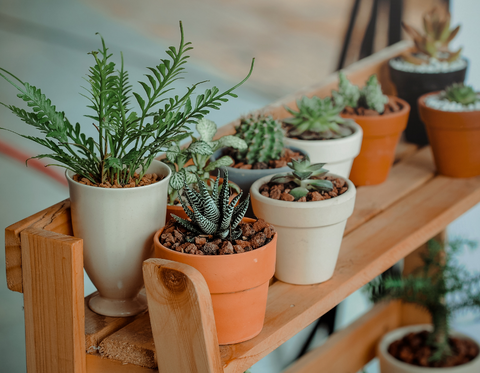 Plants for shelves for an impeccable living room