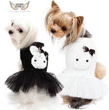 Puppy Angel Natty Rabbit Tutu Dress PA-DR128