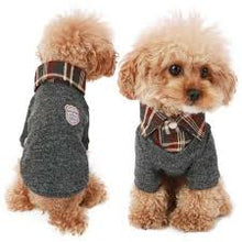 Puppy Angel Ivy Chic Sweater PA-SW066