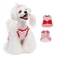 Puppy Angel Pretty Frilly Diva Glam Dress PA-DR099