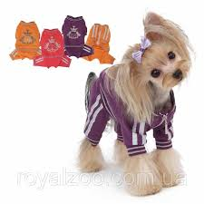 Puppy Angel Luxury Paw Jogging Suit PA-OR101