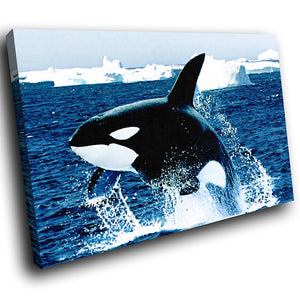 A046 Framed Canvas Print Colourful Modern Animal Wall Art - Blue Black Killer Whale-Canvas Print-WhatsOnYourWall