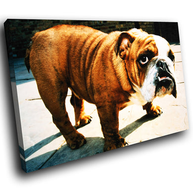 A052 Framed Canvas Print Colourful Modern Animal Wall Art - Brown Bulldog Cute Dog-Canvas Print-WhatsOnYourWall