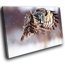A060 Framed Canvas Print Colourful Modern Animal Wall Art - Brown Owl White Snow Cool-Canvas Print-WhatsOnYourWall