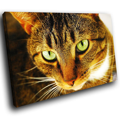A063 Framed Canvas Print Colourful Modern Animal Wall Art - Brown Lynx Cat Cute Green-Canvas Print-WhatsOnYourWall