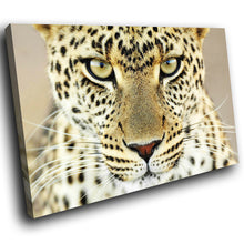 A064 Framed Canvas Print Colourful Modern Animal Wall Art - White Yellow Leopard Cat-Canvas Print-WhatsOnYourWall