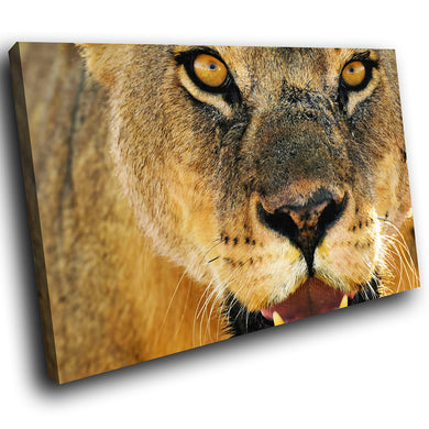 A065 Framed Canvas Print Colourful Modern Animal Wall Art - Brown Lioness Orange Cool-Canvas Print-WhatsOnYourWall