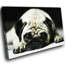 A088 Framed Canvas Print Colourful Modern Animal Wall Art - Grey Black Pug Dog Pup-Canvas Print-WhatsOnYourWall