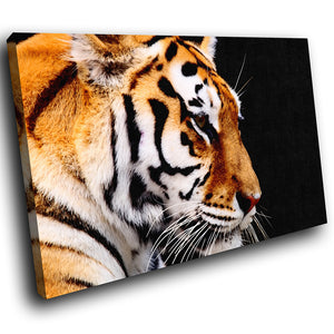 A105 Framed Canvas Print Colourful Modern Animal Wall Art - Orange Tiger Black Cool-Canvas Print-WhatsOnYourWall