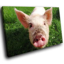 A118 Framed Canvas Print Colourful Modern Animal Wall Art -  Pink Pig Piglet Green Field - WhatsOnYourWall