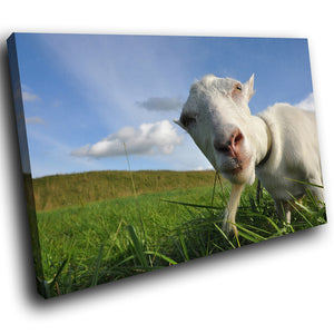 A128 Framed Canvas Print Colourful Modern Animal Wall Art - Blue Sky Green Field Goat-Canvas Print-WhatsOnYourWall