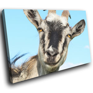 A136 Framed Canvas Print Colourful Modern Animal Wall Art - Cute Smiling Goat Grey Grin-Canvas Print-WhatsOnYourWall