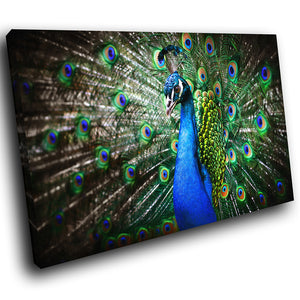 A141 Framed Canvas Print Colourful Modern Animal Wall Art - Blue Peacock Feathers Plumage-Canvas Print-WhatsOnYourWall