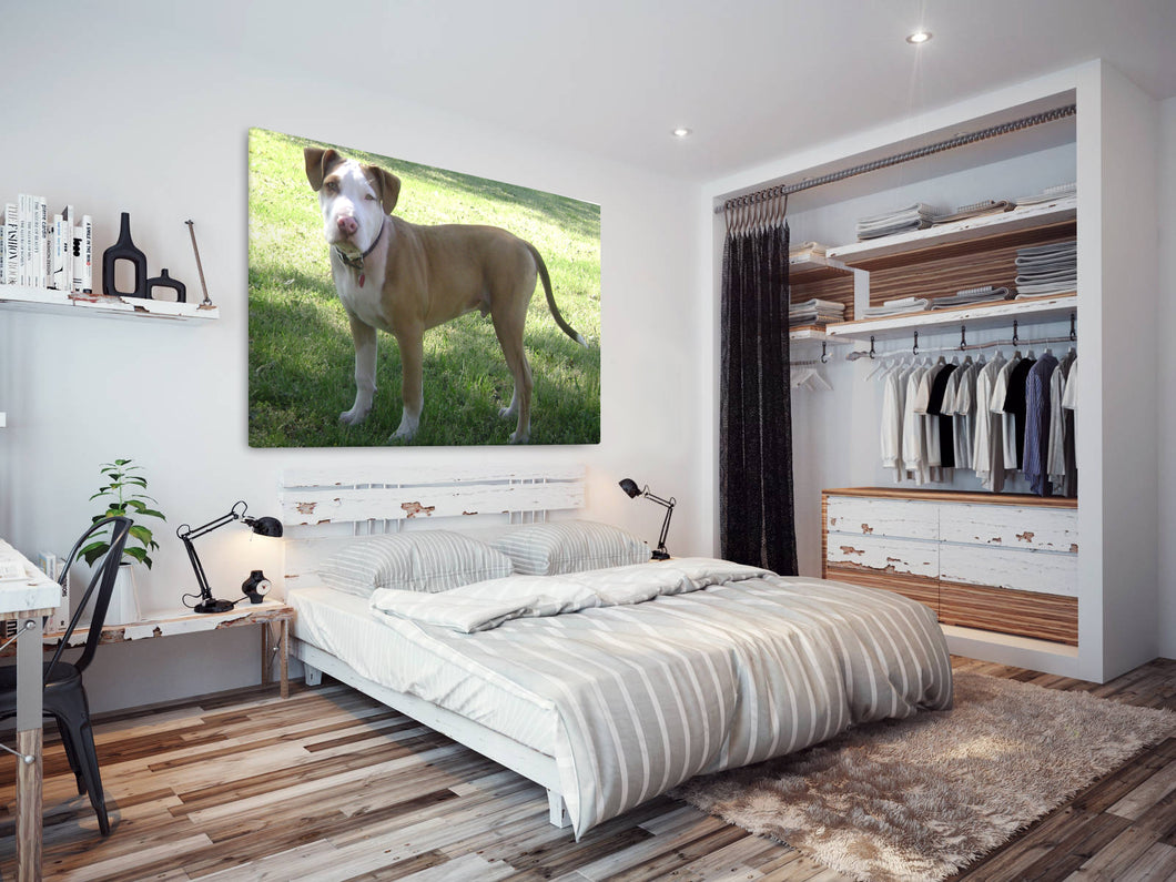 A144 Framed Canvas Print Colourful Modern Animal Wall Art - Brown White Garden Puppy Dog-Canvas Print-WhatsOnYourWall