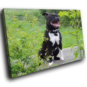 A146 Framed Canvas Print Colourful Modern Animal Wall Art - Black Pitbull Terrier Green-Canvas Print-WhatsOnYourWall